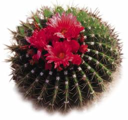 cactus-logo_small