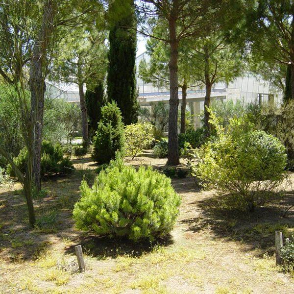 Il giardino mediterraneo