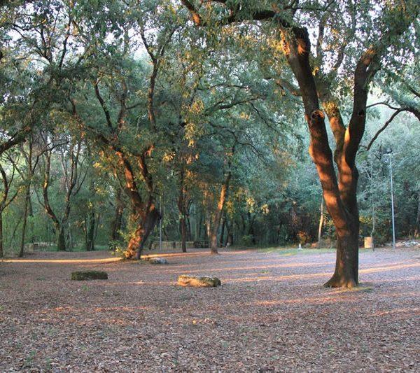 Il bosco di lecci