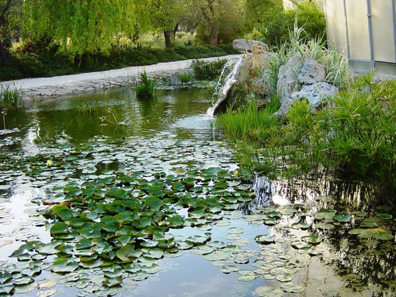 Il laghetto naturale con papiri e ninfee la cutura giardino botanico - Giardino delle ninfee ...