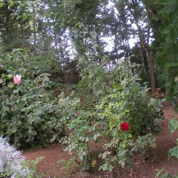 Il Giardino dei profumi