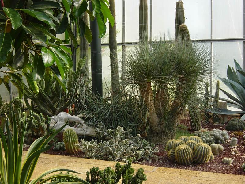 Serra 15 small la cutura giardino botanico for Serra piante grasse