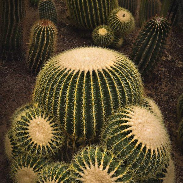 Serra di piante grasse e tropicali