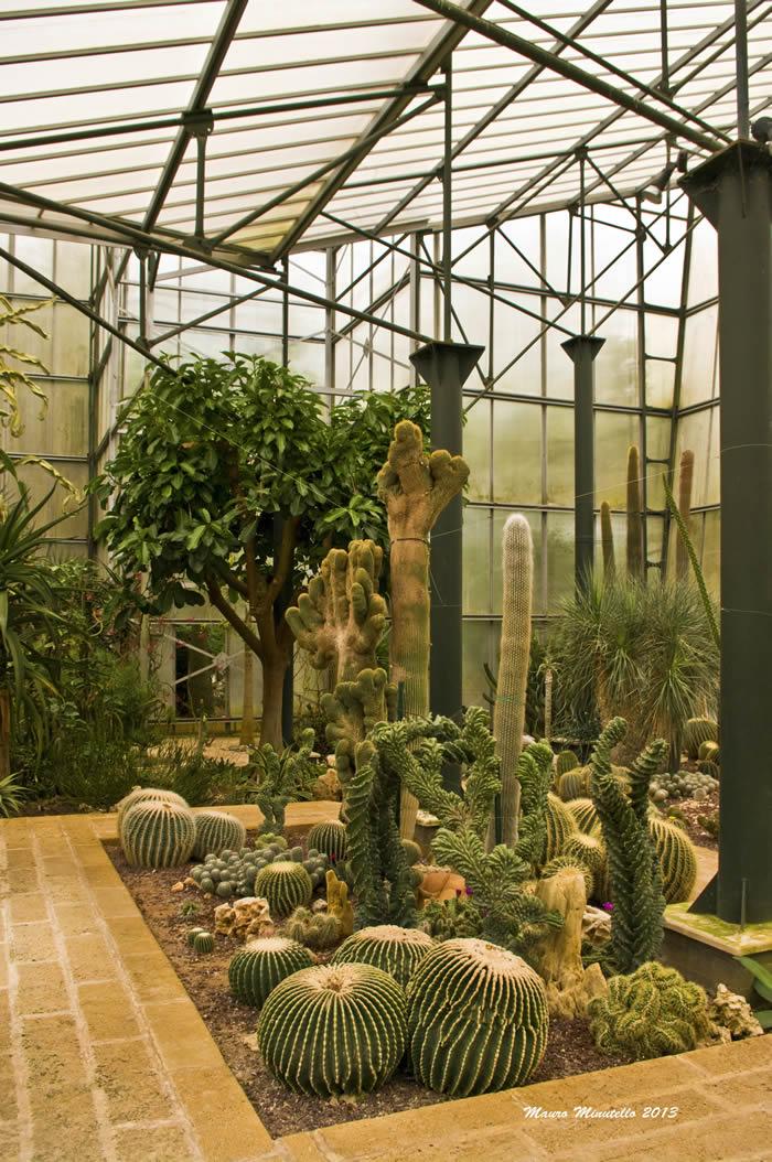 la serra di piante grasse e tropicali la cutura