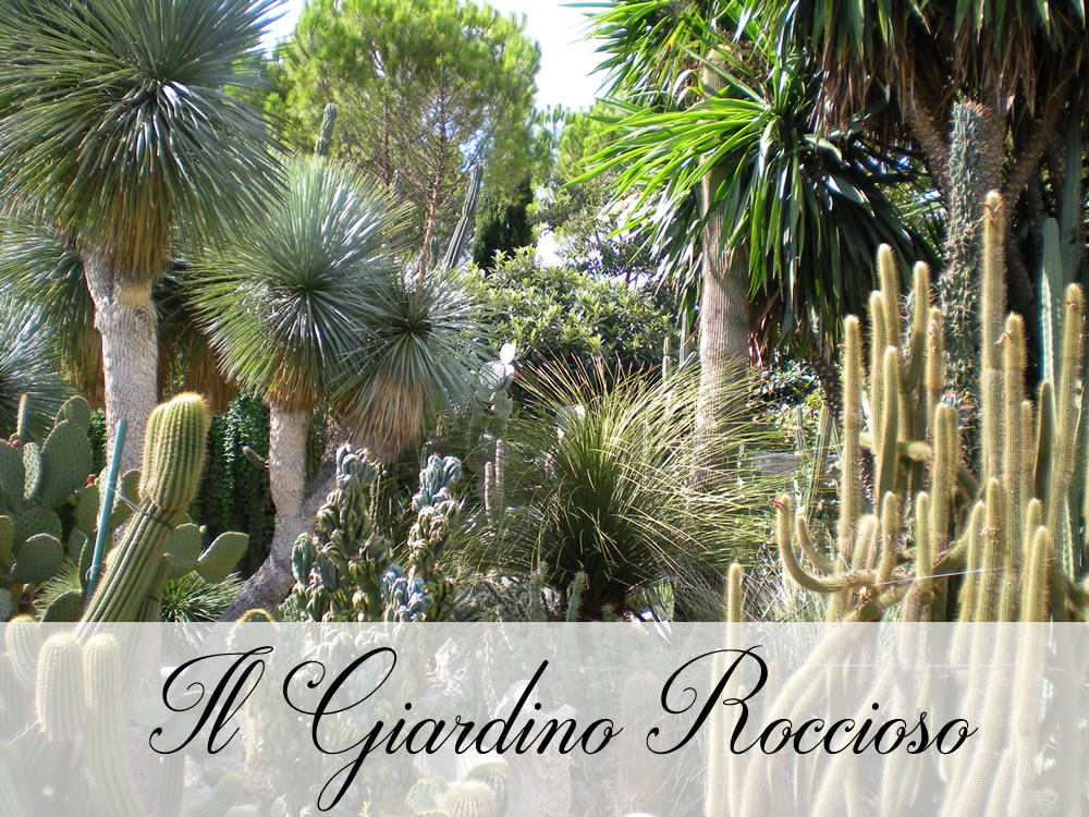 Piante grasse ogni venerd visita guidata nel giardino for Giardino roccioso con piante grasse